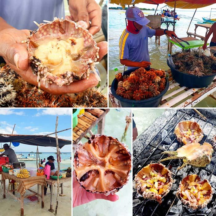 處女島-薄荷島, 島上市集, 海膽, 海鮮, 食材
