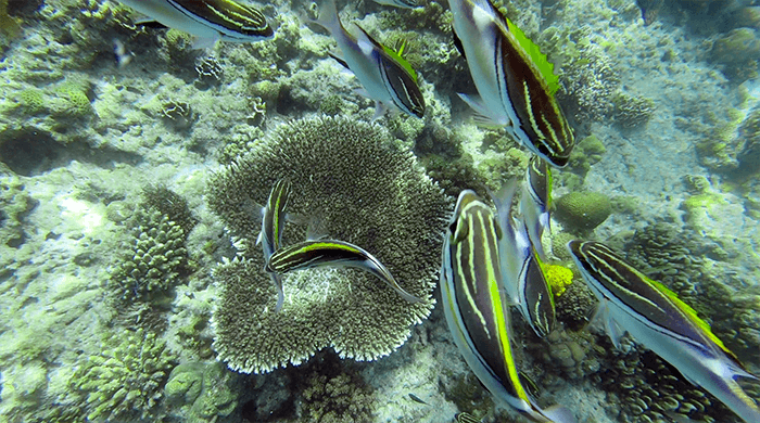 cebu-olango-island-022